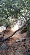 Rock Climbing Photo: Trail View right above roadside boulder