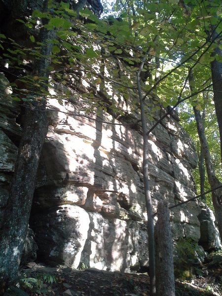 Right side of the main wall, there is a hawks nest along the middle ledge which may cause problems in the spring