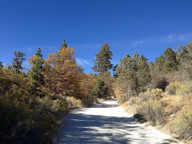 Fall colors along Polique Canyon Road (2N09), Big Bear North