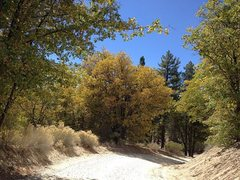 Rock Climbing Photo: Fall colors along 2N13, Big Bear North