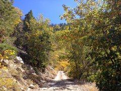 Rock Climbing Photo: Fall colors along 2N13, Big Bear North