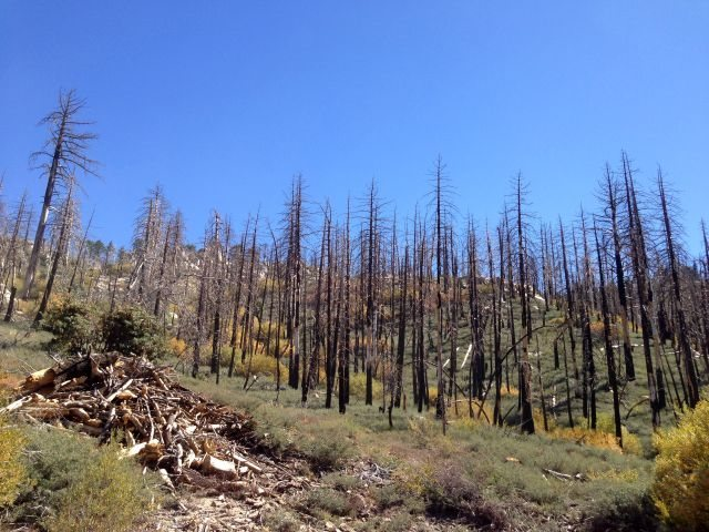 Burned trees along 2N13, Big Bear North