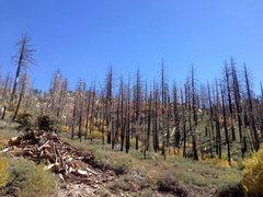 Rock Climbing Photo: Burned trees along 2N13, Big Bear North