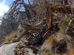 old rotted tree that was once a reliable anchor at the top of Sauratown