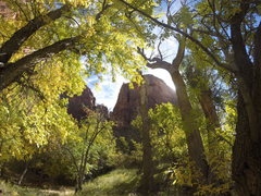 Rock Climbing Photo: Shune's as viewed from behind Zions autumn leaves