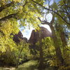 Shune's as viewed from behind Zions autumn leaves