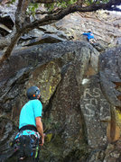 Rock Climbing Photo: Noah placing a nut before the crux on Blind Ambiti...