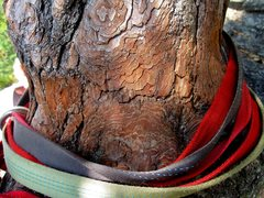 Rock Climbing Photo: Bark abrasion from rap slings