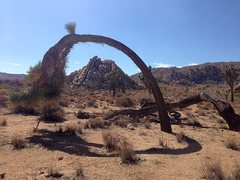 Rock Climbing Photo: Mount Grossvogel from the east, Joshua Tree NP