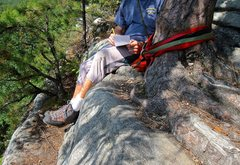 Rock Climbing Photo: Protected roots