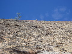 Rock Climbing Photo: Looking Up at the 2nd bolt from where the climb pa...