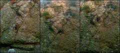 Rock Climbing Photo: Lynn Hill tr'ing pitch one.