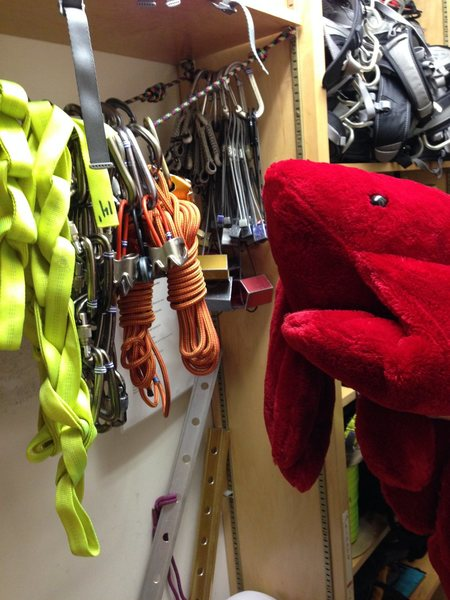 Mr. Lobster contemplates his gear selection.