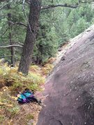 Rock Climbing Photo: Slanty tree where I think most parties start. We s...