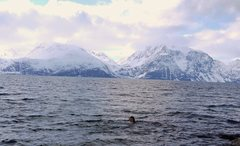 Fjord dip after ski, Lyngen Alps