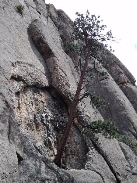 The Cavity grows a tree at Lumpy Ridge, CO
