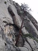 Rock Climbing Photo: The Cavity grows a tree at Lumpy Ridge, CO