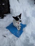 Rock Climbing Photo: Mountain dog.