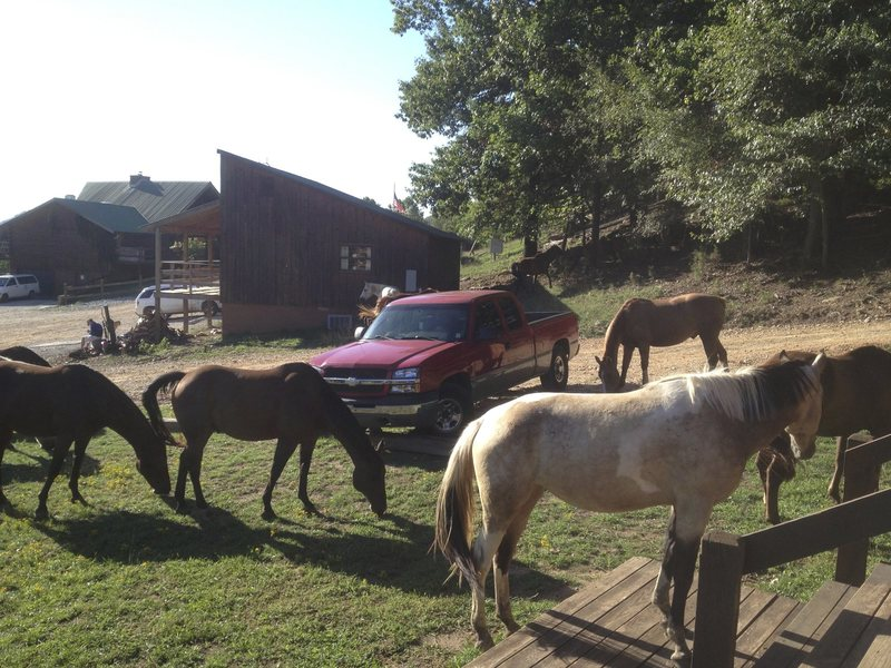 Horses surrounding my truck.
