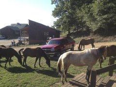 Rock Climbing Photo: Horses surrounding my truck.