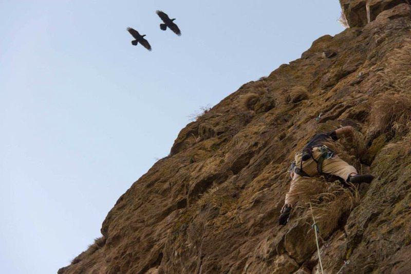 Rock Climbing Photo: Amora means Hawk in Amharic... in the early season...