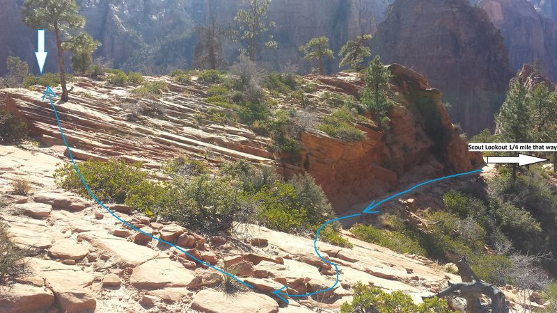 Here's the Beta for finding the top of the route if you're hiking up to rap in and top-rope solo the route. Go left at the West_Rim/Angel_Landing fork in the trail (obvious vista with outhouse), and continue for 1/4 mile. The bolts are just over the edge, but look for obvious rope grooves on the ground from people using the tree to haul.