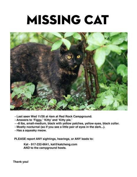 Missing cat at Red Rock Campground