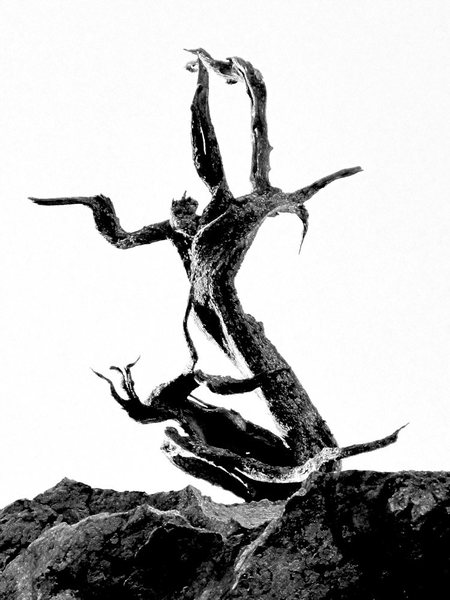 Rock Climbing Photo: The terror tree at the very top of the cliff...lik...