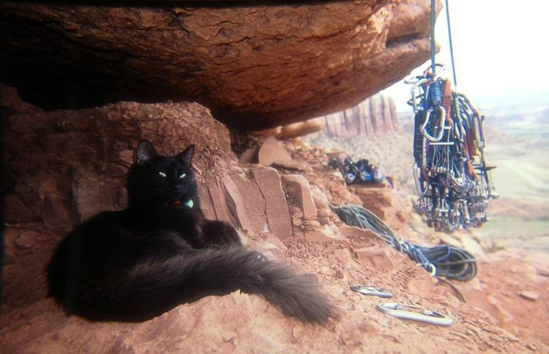 Rock Climbing Photo: The King Cat, Norm...The Coach's kitty.