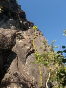 Rock Climbing Photo: Zachs Crack climbs the dirty crack system up the r...