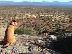 Rock Climbing Photo: Rogue