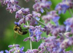 Rock Climbing Photo: Bee
