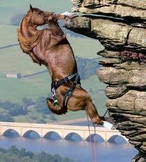 Rock Climbing Photo: Horse. Rock. Kentucky.