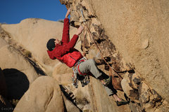 Rock Climbing Photo: Matt Callender pullin on Henrietta's.  Photo by St...