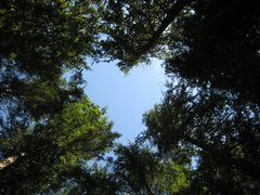 Rock Climbing Photo: Looking up at the trees from our campsite at the C...