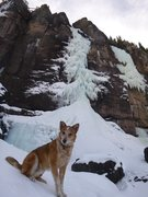Rock Climbing Photo: This pooch crushes!