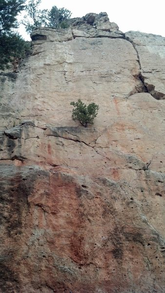 This route climbs left of the tree on the ledge.