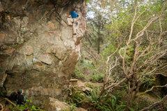 Rock Climbing Photo: Jager Bomb