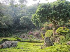 Rock Climbing Photo: Cultivated garden near Monkey Rock