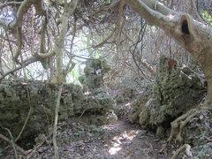 Rock Climbing Photo: To Hobo Wall, White Wall