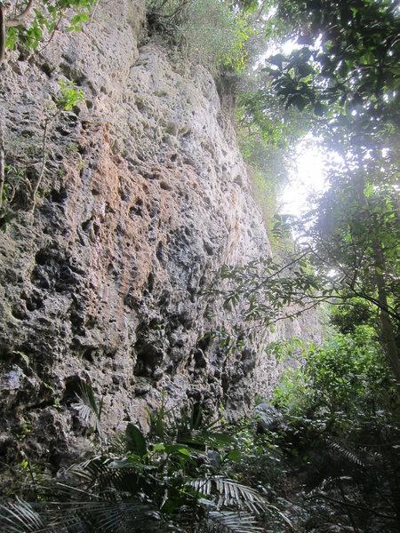 Rock Climbing Photo: Emerald Hill