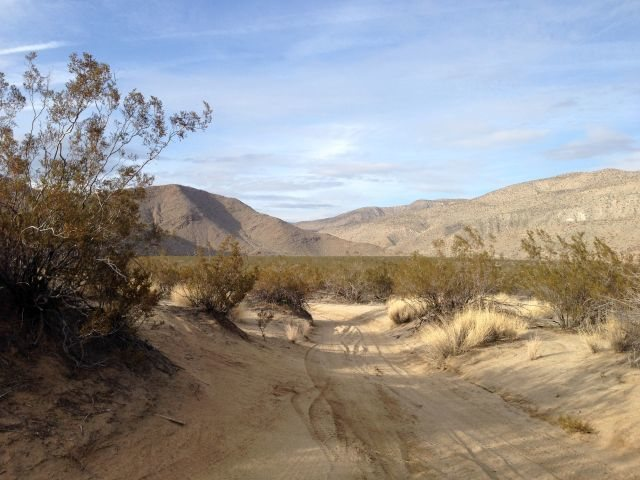 Looking north in Upper Coyote Canyon, Anza Borrego State Park
