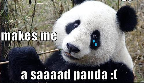 Rock Climbing Photo: Sad panda.