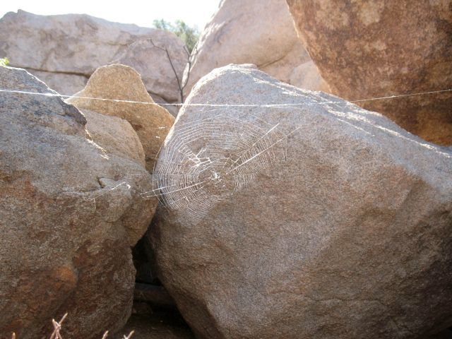 Rock Climbing Photo: Spider's web, Joshua Tree NP