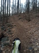 Searching for boulders with my pooch