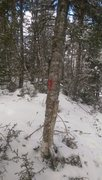 Rock Climbing Photo: If you see these spray paint markers on the trees ...