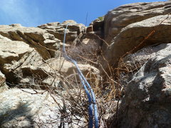 Rock Climbing Photo: The part above the tree.