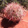 Crazy Cactus?
