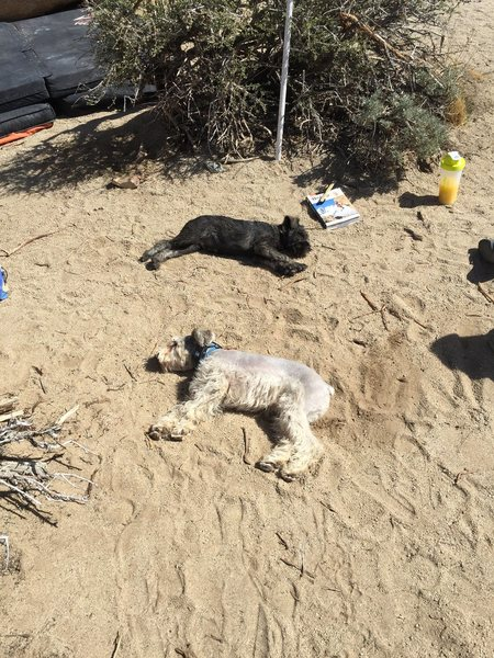 found 2 dead dogs by the tut boulder
