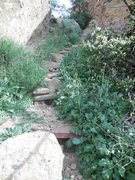 Rock Climbing Photo: Heavy vegetation growth along the trail to the sou...